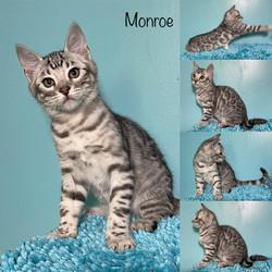 Monroe 11 weeks