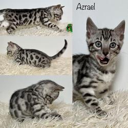 Azrael 7 weeks
