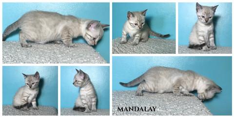 Mandalay 6 weeks.jpg