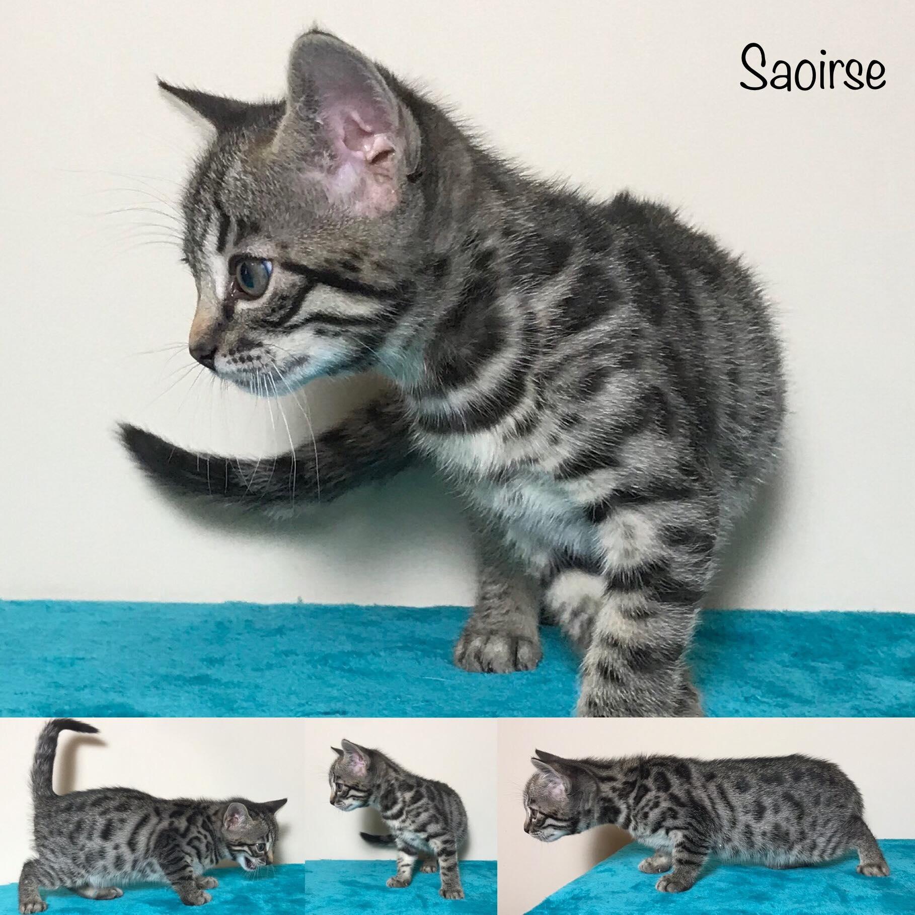 Saoirse 6 weeks