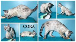 Cora 19 weeks