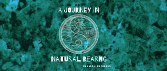 A Journey in Natural Rearing