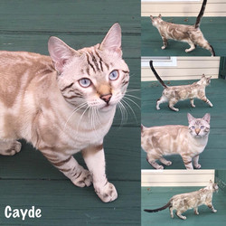 Cayde 6 months