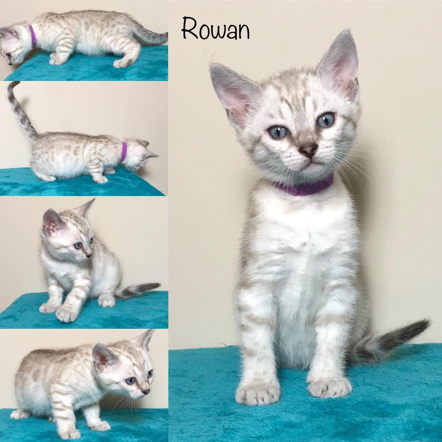 Rowan 6 weeks