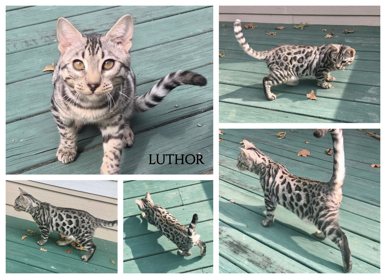 Luthor 21 weeks.jpg