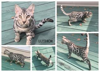 Luthor 21 weeks.jpg