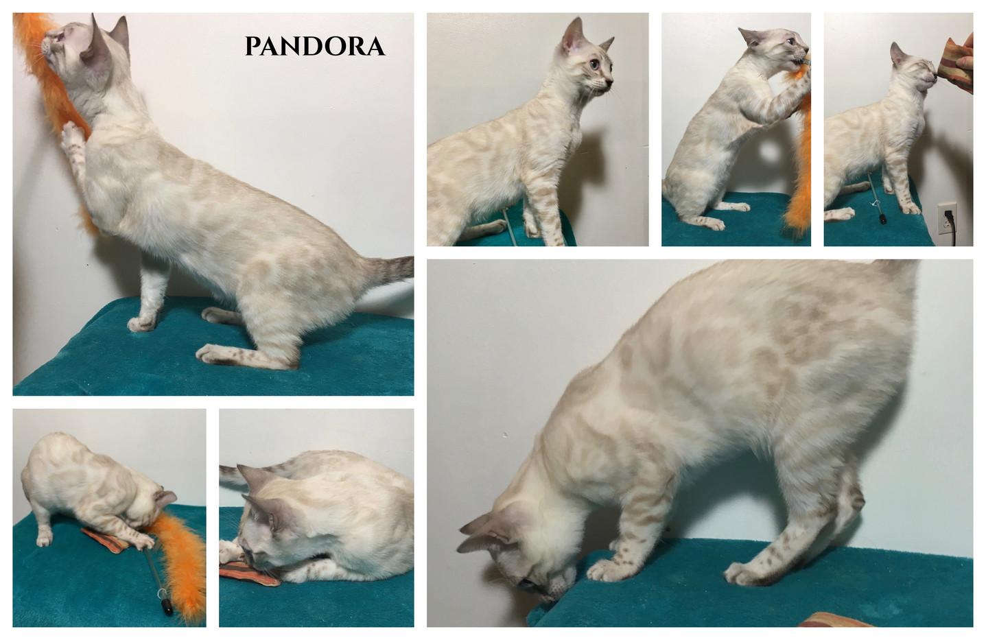 Pandora 20 weeks.jpg