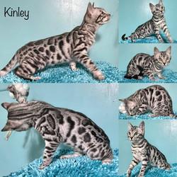 Kinley 15 weeks