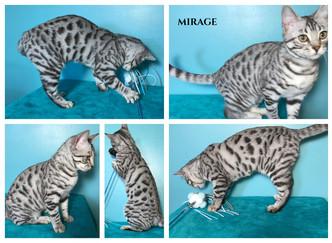 Mirage 20 weeks.jpg