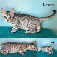 Leviathan 9 weeks