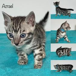 Azrael 5 weeks