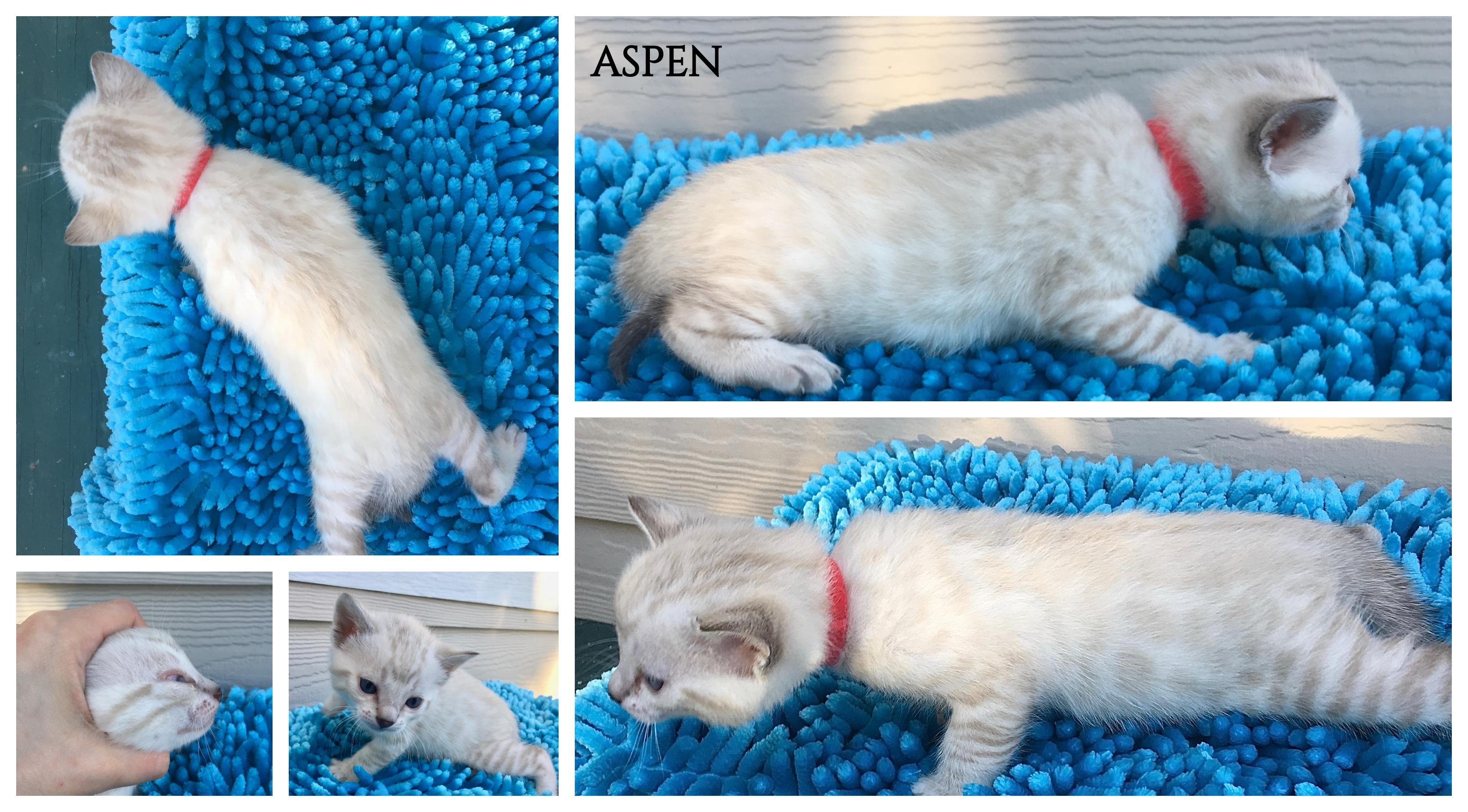 Aspen 4 weeks