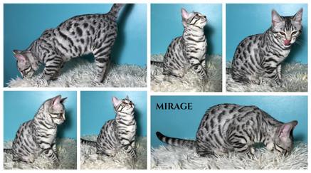 Mirage 15 weeks.jpg