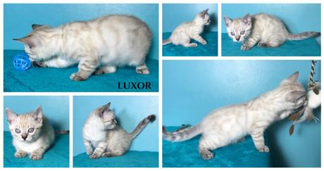 Luxor 8 weeks.jpg