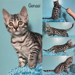 Genasi 10 weeks