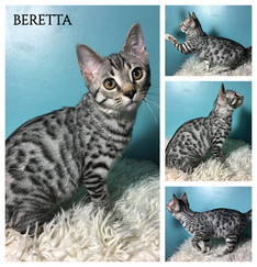 Beretta 17 weeks.jpg