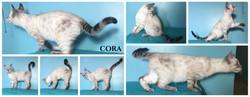 Cora 14 weeks