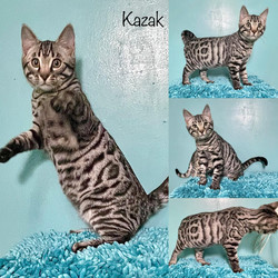 Kazak 14 weeks