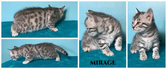 Mirage 5 weeks.jpg