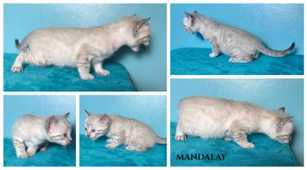 Mandalay 4 weeks.jpg