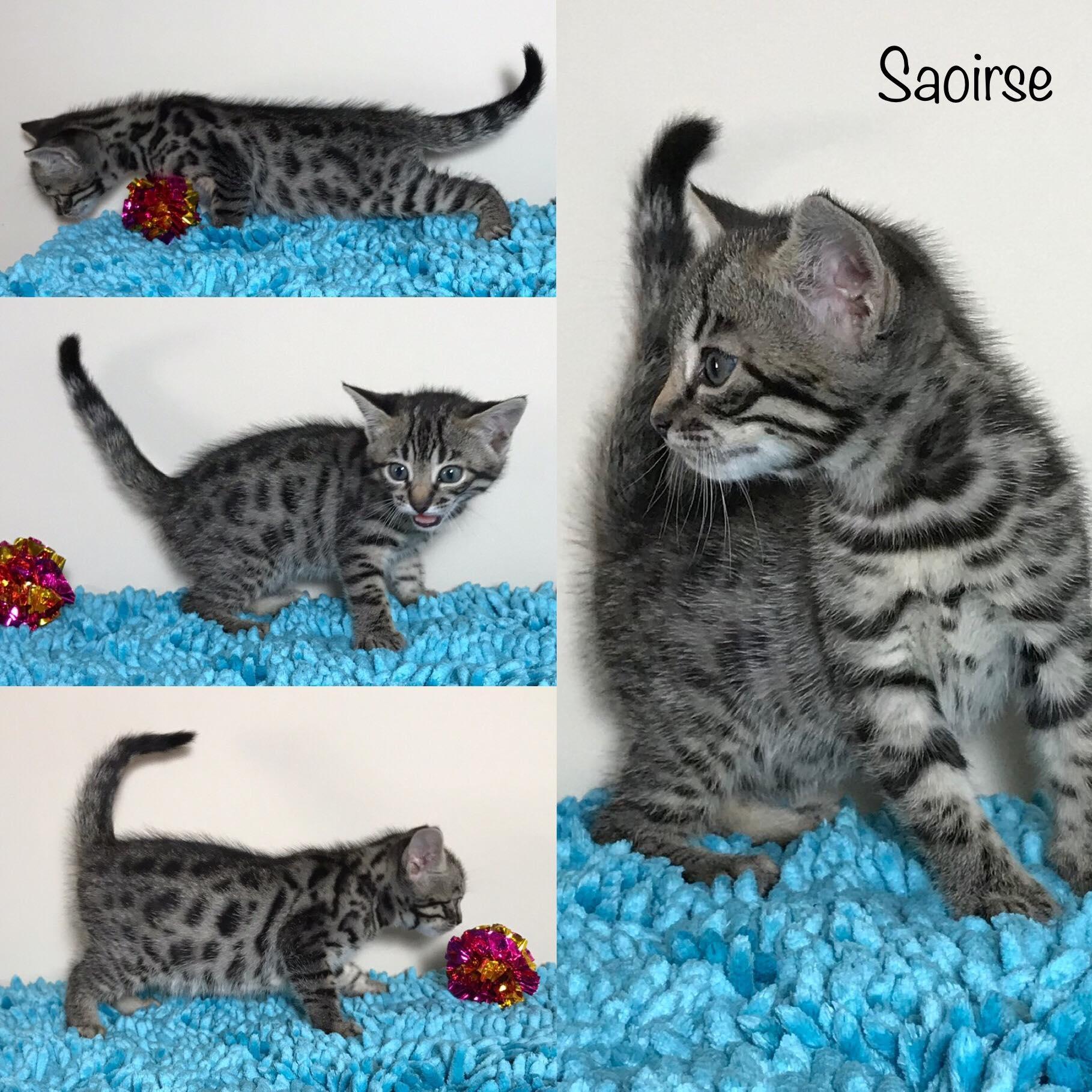 Saoirse 5 weeks
