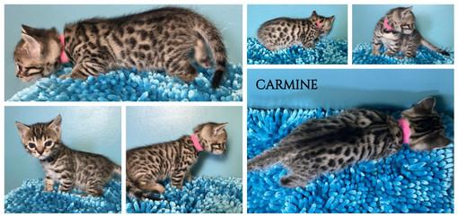 Carmine 4 weeks.jpg