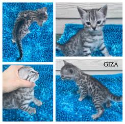 Giza 5 weeks.jpg
