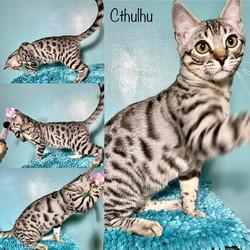 Cthluhu