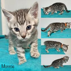 Monroe 5 weeks