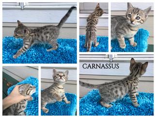 Carnassus 7 weeks.jpg