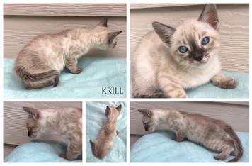 Krill 7 weeks.jpg