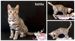 Calitha 17 weeks