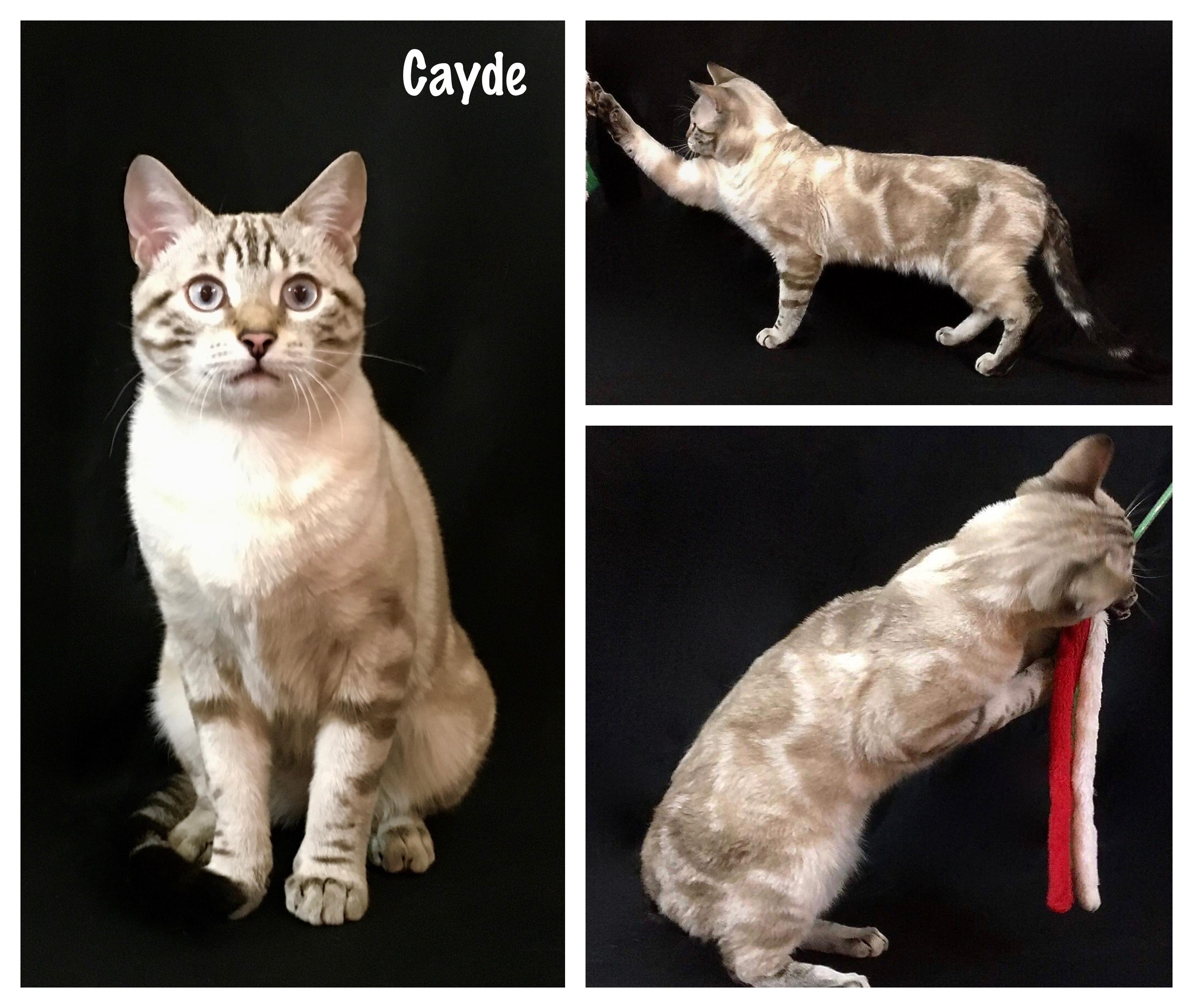 Cayde 22 weeks