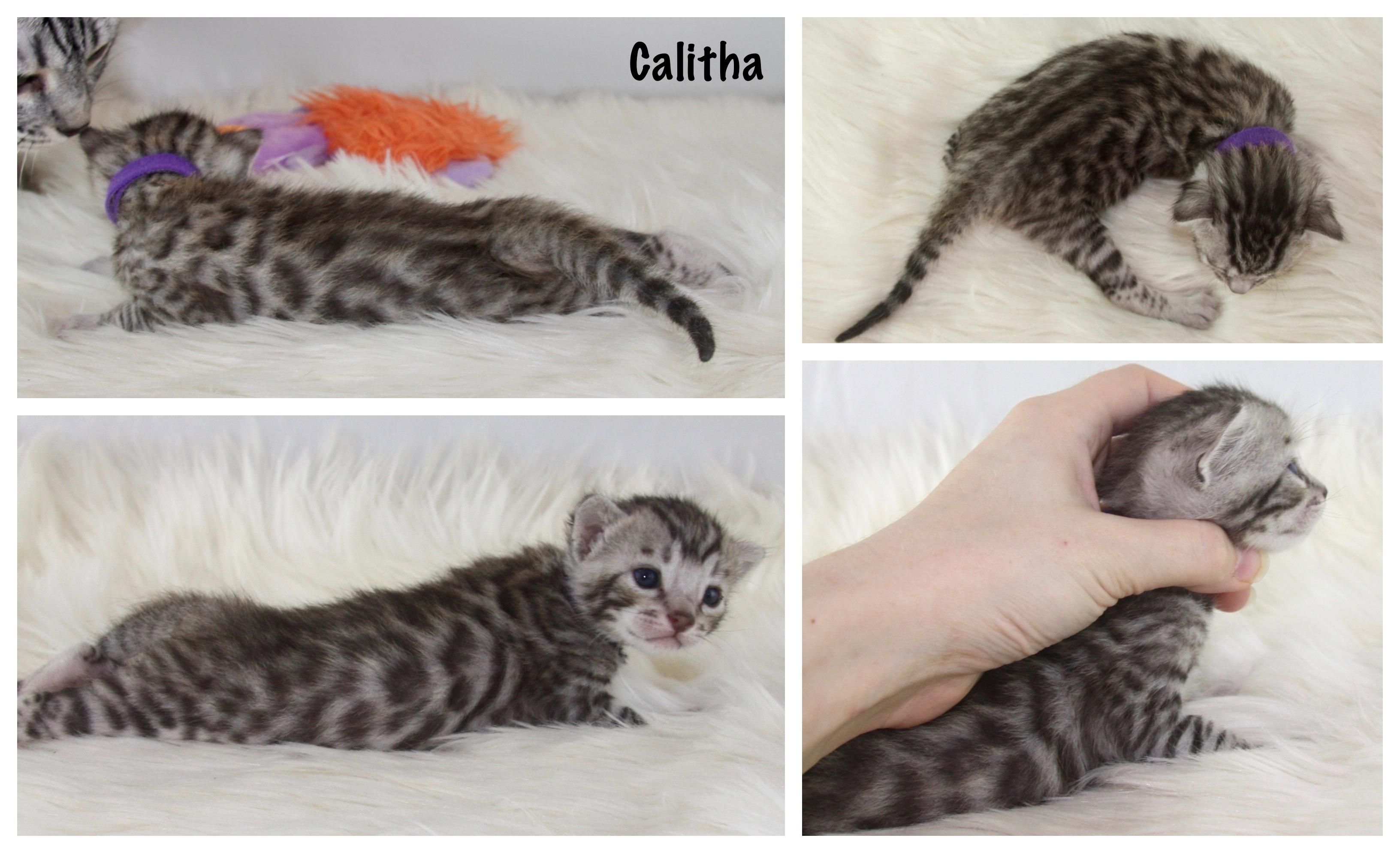 Calitha 3 weeks