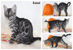 Razoul 13 weeks