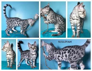 Sullivan 20 weeks.jpg