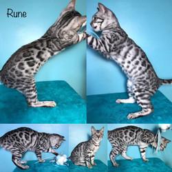 Rune 18 weeks