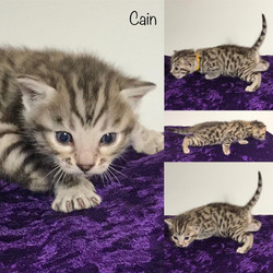 Cain 3 weeks