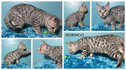 Norinco 14 weeks.jpg