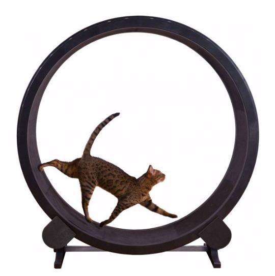 One Fast Cat Wheeln
