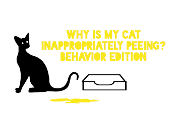 Why is my Cat Inappropriately Peeing? Behavior Edition