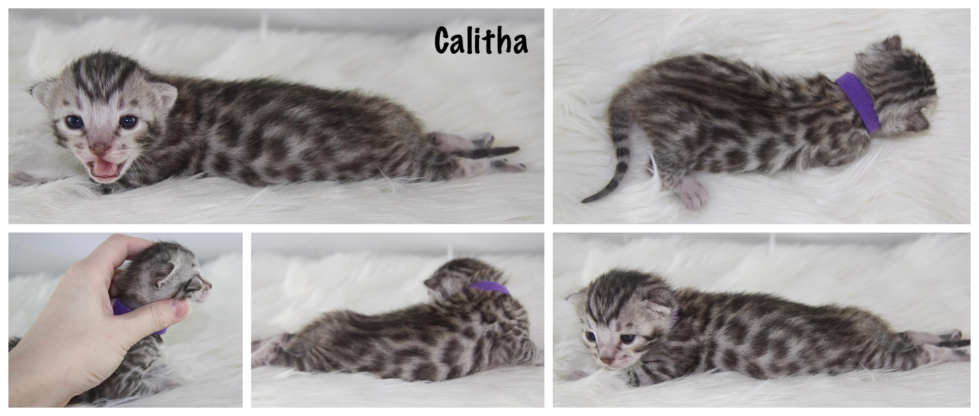 Calitha 2 weeks