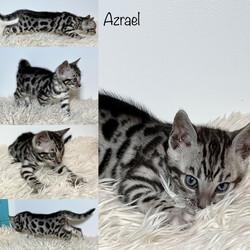 Azrael 6 weeks