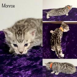 Monroe 3 weeks