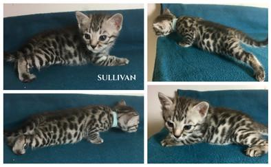 Sullivan 3 weeks.jpg