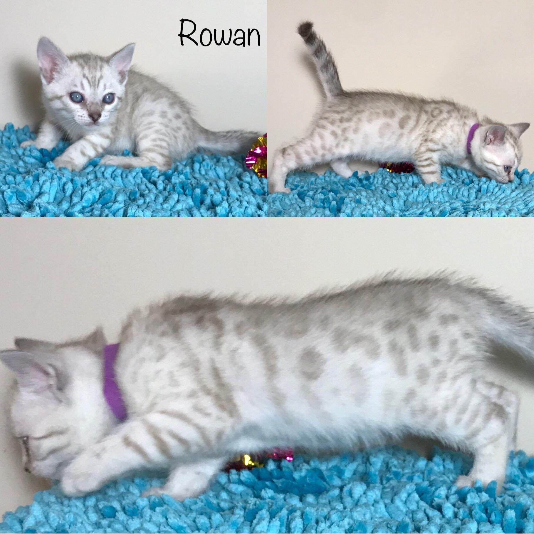 Rowan 5 weeks