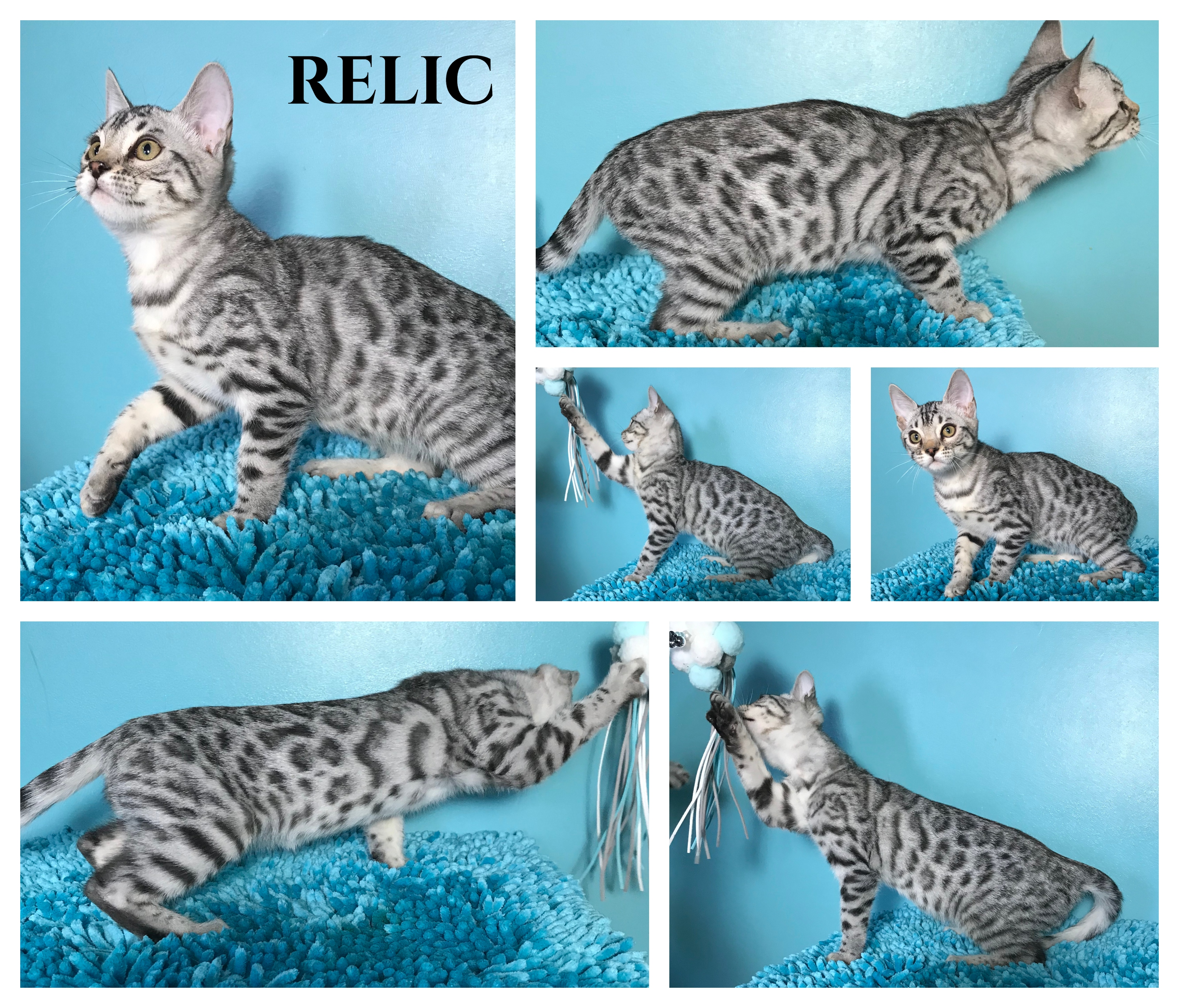 Relic 13 weeks