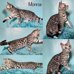 Monroe 14 weeks
