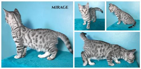 Mirage 8 weeks.jpg