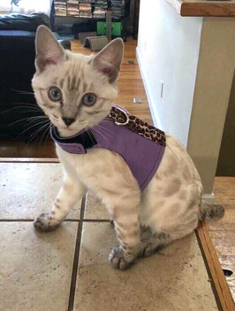 Niema Cat Jackets